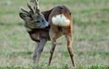 Fauna locale